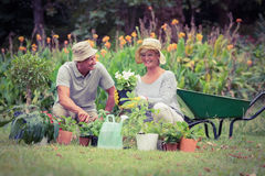Happy grandmother and grandfather gardening Royalty Free Stock Photography