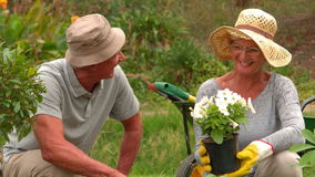 Happy grandmother and grandfather gardening stock footage