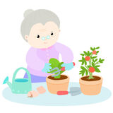 Happy grandmother love plant lettuce  Stock Photography