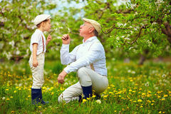 Happy grandpa with grandson blowing dandelions in spring garden royalty free stock images