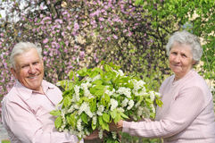 Happy grandparents. In flowering garden with posy Stock Images