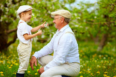 Happy grandson, and grandpa having fun in spring garden, blowing dandelions Stock Image
