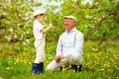 Happy grandson, and grandpa having fun in spring garden, blowing dandelions Royalty Free Stock Photos