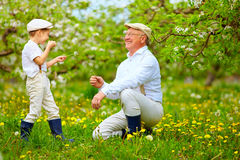 Happy grandson, and grandpa having fun in spring garden, blowing dandelions Royalty Free Stock Photo