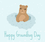Happy Groundhog Day. Greeting card flat style. Celebration of spring. Cute, funny marmot comes out  the hole. Vector Stock Photos