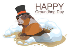 Happy Groundhog Day. Marmot climbed out of hole Royalty Free Stock Images