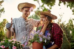 Happy guy and girl gardeners in a straw hats hold pots with petunia on the garden path in  on a sunny day. stock photography