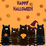 Happy Halloween background with funny black cats Royalty Free Stock Photos