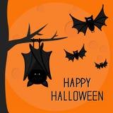 Happy Halloween card. Cute sleeping bat hanging on tree.  Royalty Free Stock Photos