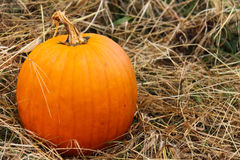 Happy Halloween County Pumpkin in Field royalty free stock photography