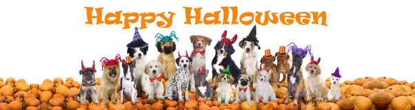 Happy halloween dogs. Group of Happy halloween dogs isolated Stock Photos