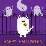 Happy Halloween. Spooky frightened cat holding pumpkin face. On stick. Forged iron fence. Three flying ghosts hands up Boo. Cute Funny cartoon baby character Royalty Free Stock Photography
