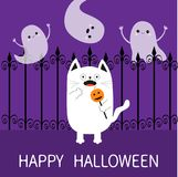 Happy Halloween. Spooky frightened cat holding pumpkin face on stick. Forged iron fence. Three flying ghosts hands up Boo. Funny C Royalty Free Stock Photography