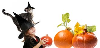 Halloween witch with a cat Stock Photos