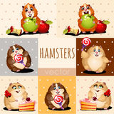 Happy hamsters with apple, cake and candy Royalty Free Stock Images