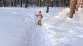 Happy handsome little boy skis in forest at sunny day, back view stock video