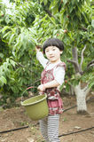 Happy harvest. The little girl is picking cherries Stock Images