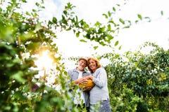 Senior couple gardening in the backyard garden. Stock Image