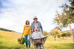 Senior couple with grandaughter gardening in the backyard garden. Royalty Free Stock Image