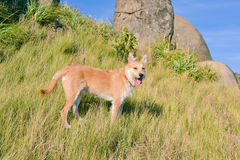 Happy and heartily dog hiking at mountains Stock Photography