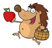 Happy hedgehog runs with apple Royalty Free Stock Image