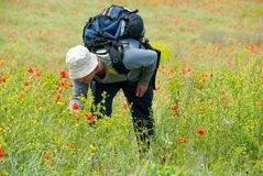 Happy hiker on a poppy field Royalty Free Stock Photos