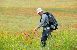 Happy hiker on a poppy field Royalty Free Stock Images