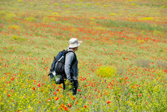 Happy hiker on a poppy field Royalty Free Stock Image