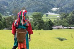 Happy hill tribe in paddy rice field colorful costume dress royalty free stock photography