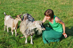 Happy hippie girl and goats Royalty Free Stock Photo