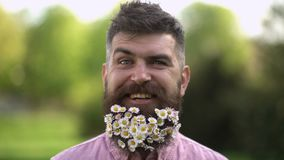 Happy hipster with tiny white flowers in his long beard. Smiling man enjoying warm sunny day on green meadow, spring. Freshness concept. Eco friendly lifestyle stock video