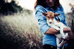 Happy hipster woman smiles and holds a small dog. Little puppy w. Ith hipster girls in field sunset background. Vintage tone style royalty free stock images