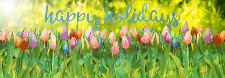 Happy holidays. Bouquet of tulips in various colors and words happy holidays on lush green grass meadow background with bokeh and flare vector illustration