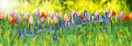 Happy holidays. Bouquet of tulips in various colors and words happy holidays on lush green grass meadow background with bokeh and flare Stock Photo