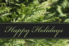 Happy Holidays Greeting. Evergreen Background and text Happy Holidays Stock Image