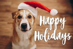 Happy holidays text, seasonal greetings card sign. dog in santa. Hat. space for text. cute surprised brown dog in red hat sitting in stylish room with adorable Stock Photos