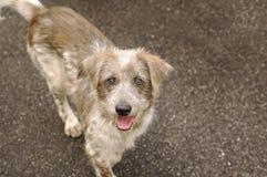 Happy Homeless Dog. On street stock photos