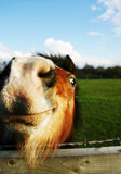Happy horse. Close up of horse's head with a smile on its face stock photos