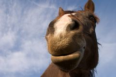 Happy horse Stock Photos
