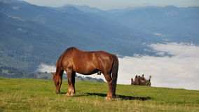 Happy horses Royalty Free Stock Images