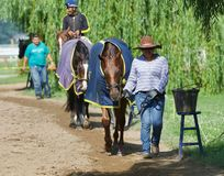 Happy Hot Walker Cooling Down Horse Wearing Blanket. Happy hot walkers cooling down their prized and valuable thoroughbreds on the backstretch of Horse Haven stock photo