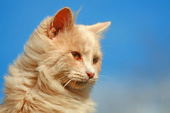 Happy House Cat. Pretty young domestic house cat on blue sky background royalty free stock images