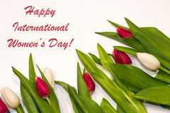 Happy international women's day background with red and white tulip flower frame. Best gift for woman on holiday. Spring stock photo