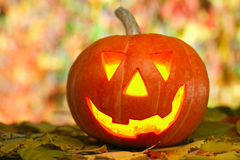 Happy Jack O'Lantern royalty free stock photo