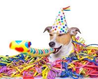 Happy new year dog celeberation Royalty Free Stock Image