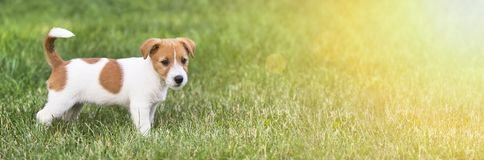 Happy dog puppy - web banner with copy space Stock Image