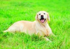 Happy joyful Golden Retriever dog is lying resting stock photography
