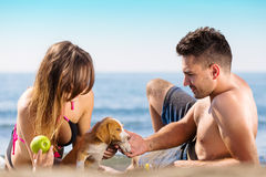 Happy just married couple lay on the beach eating apple, playing with little dog Stock Images