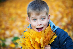 Happy kid on a background of yellow autumn leafs Stock Images