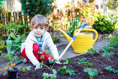 Happy kid boy planting seeds of tomatoes Stock Photos